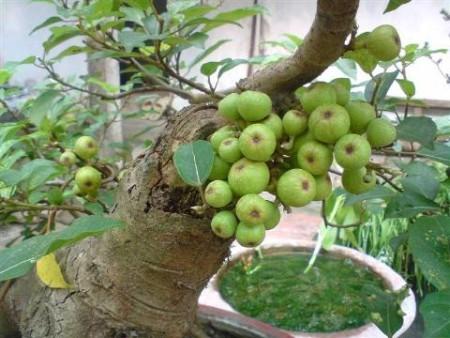 Cách trị mụn cóc với rau củ quả